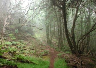 Hiking trail in Polipoli State Park, Maui, Hawaii
